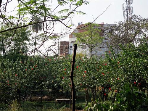 Bhopal Union Carbide